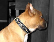 Pibull Royal Nappa Padded Hand Made Leather dog collar