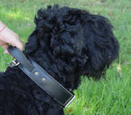 2 ply leather agitation dog collar with handle-russian Terrier